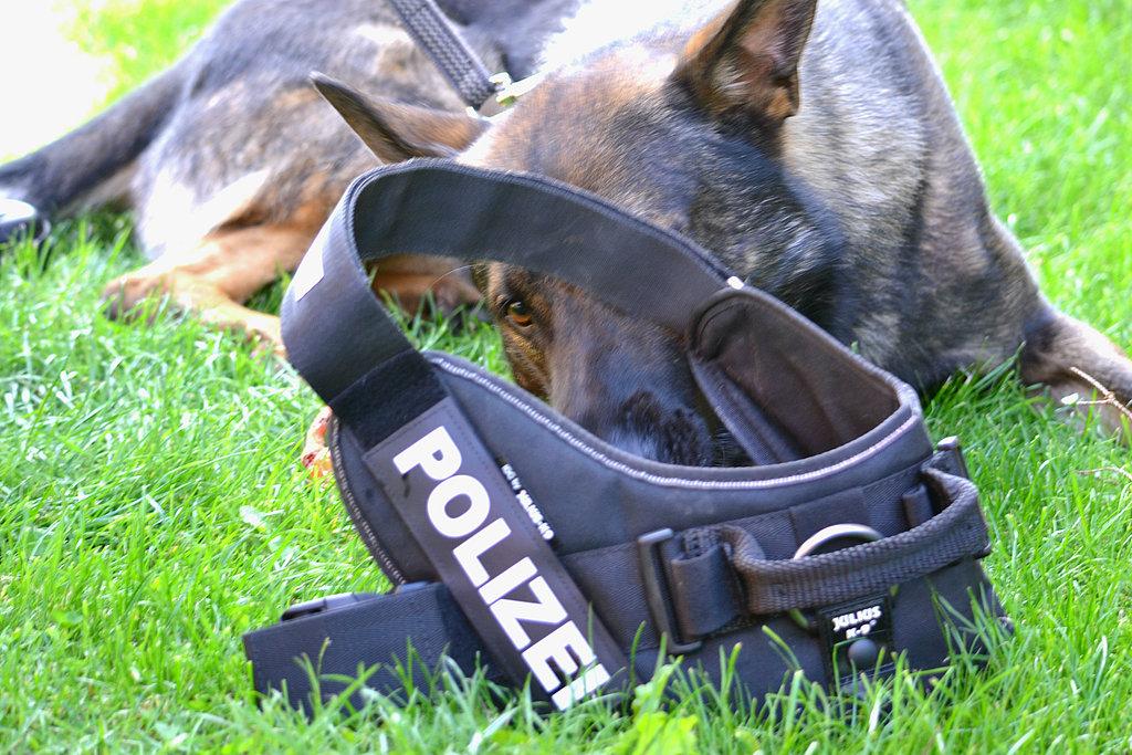 Diensthund der Thüringer Polizei